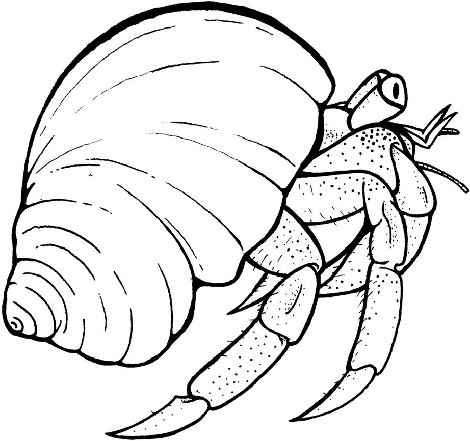 922x866 Hermit Crab Shell Coloring Page Hermit Crab Art