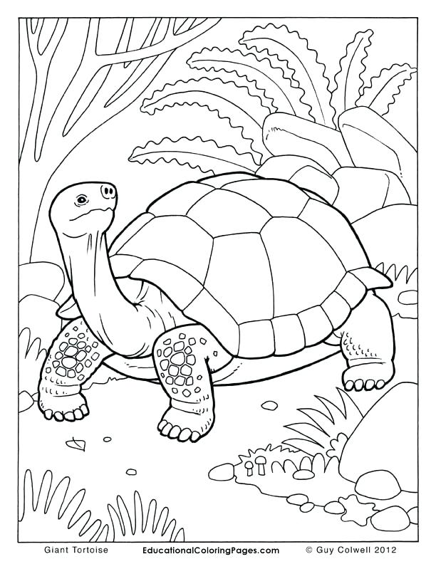 612x792 Color Drawing Book Dog Coloring Pages For Kids Preschool Crafts