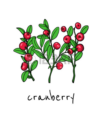 Cranberry Drawing
