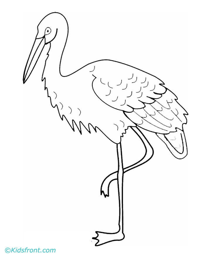 Crane Bird Drawing