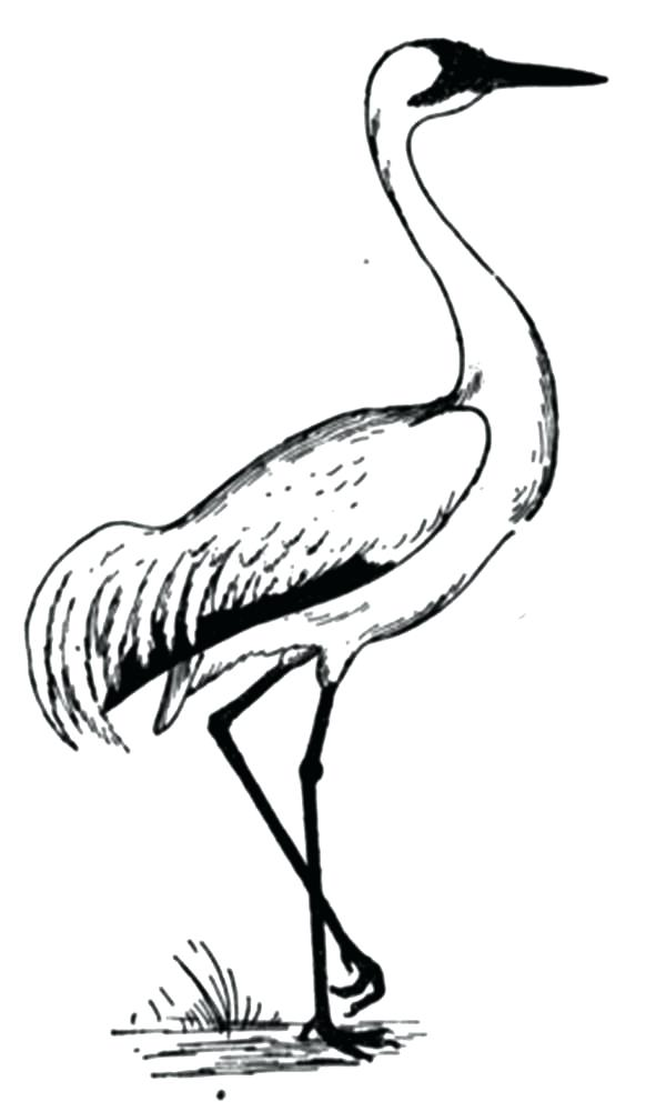 600x1000 Crane Animal Coloring Pages Crane Bird Coloring Pages Coloring