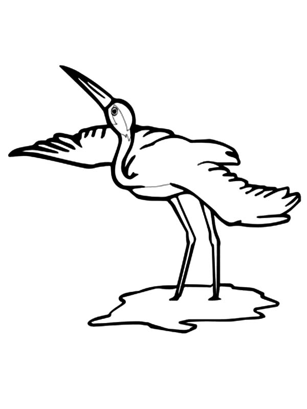 600x799 Whooping Crane Bird Coloring Pages