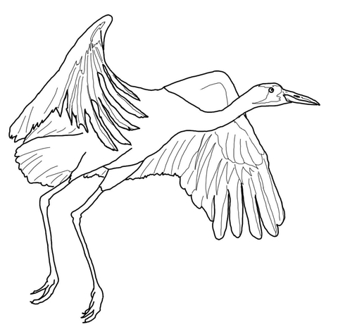 480x464 Whooping Crane Fly Coloring Page Free Printable Coloring Pages