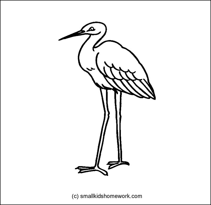 873x849 Crane Bird Outline And Coloring Picture With Interesting Facts