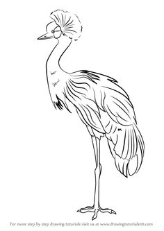 236x333 Images For Gt Japanese Crane Drawing Illustrations