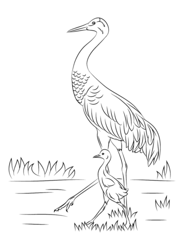 358x480 Sandhill Crane With Cute Baby Chick Coloring Page Free Printable