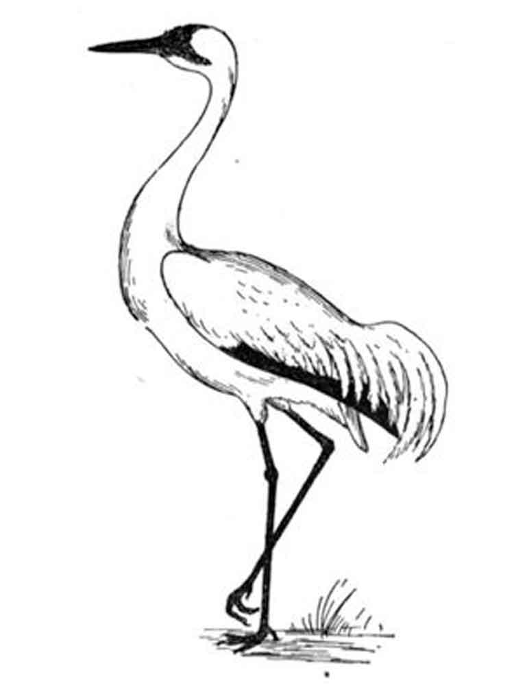 750x1000 Crane Coloring Pages. Download And Print Crane Coloring Pages