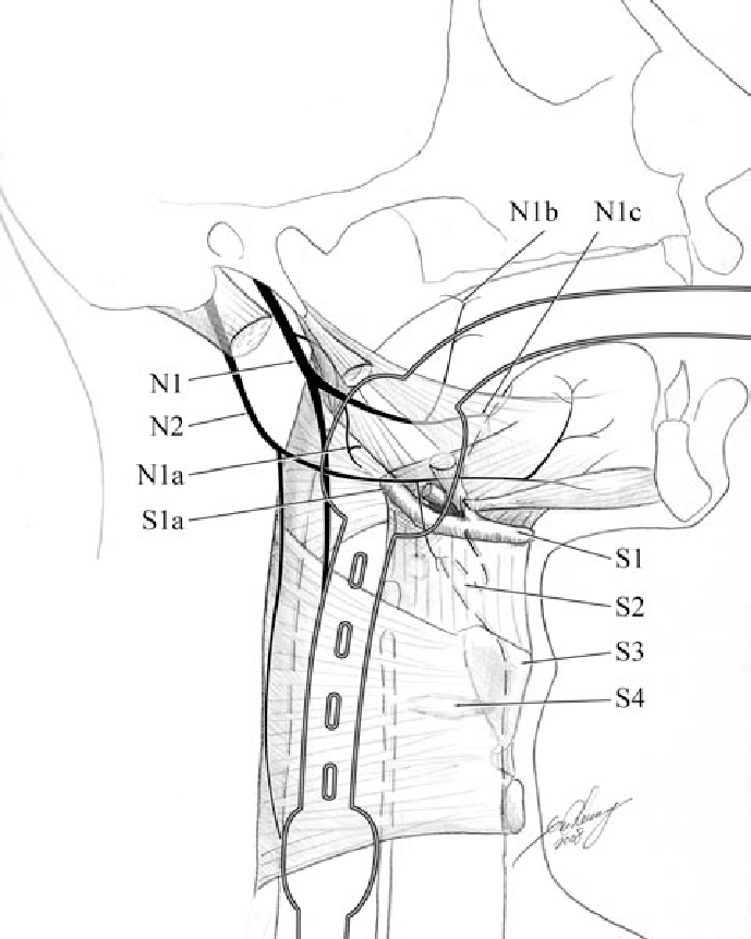 689x862 Illustration Showing The Relationship Between The Pharyngeal Cuff