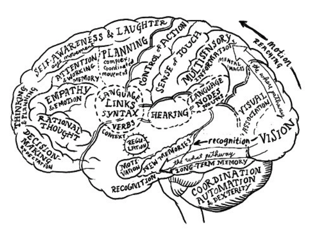 Creative Brain Drawing