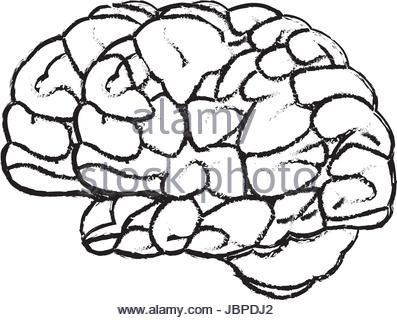 397x320 Brain Doodle Concept About Creative Right Side And Logical Left
