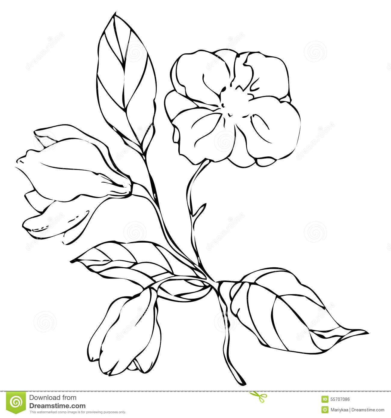 1300x1390 Dibujos De Flores De Enredadera