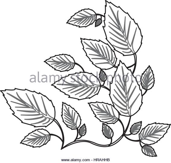 566x540 Creeper Plant Stock Vector Images