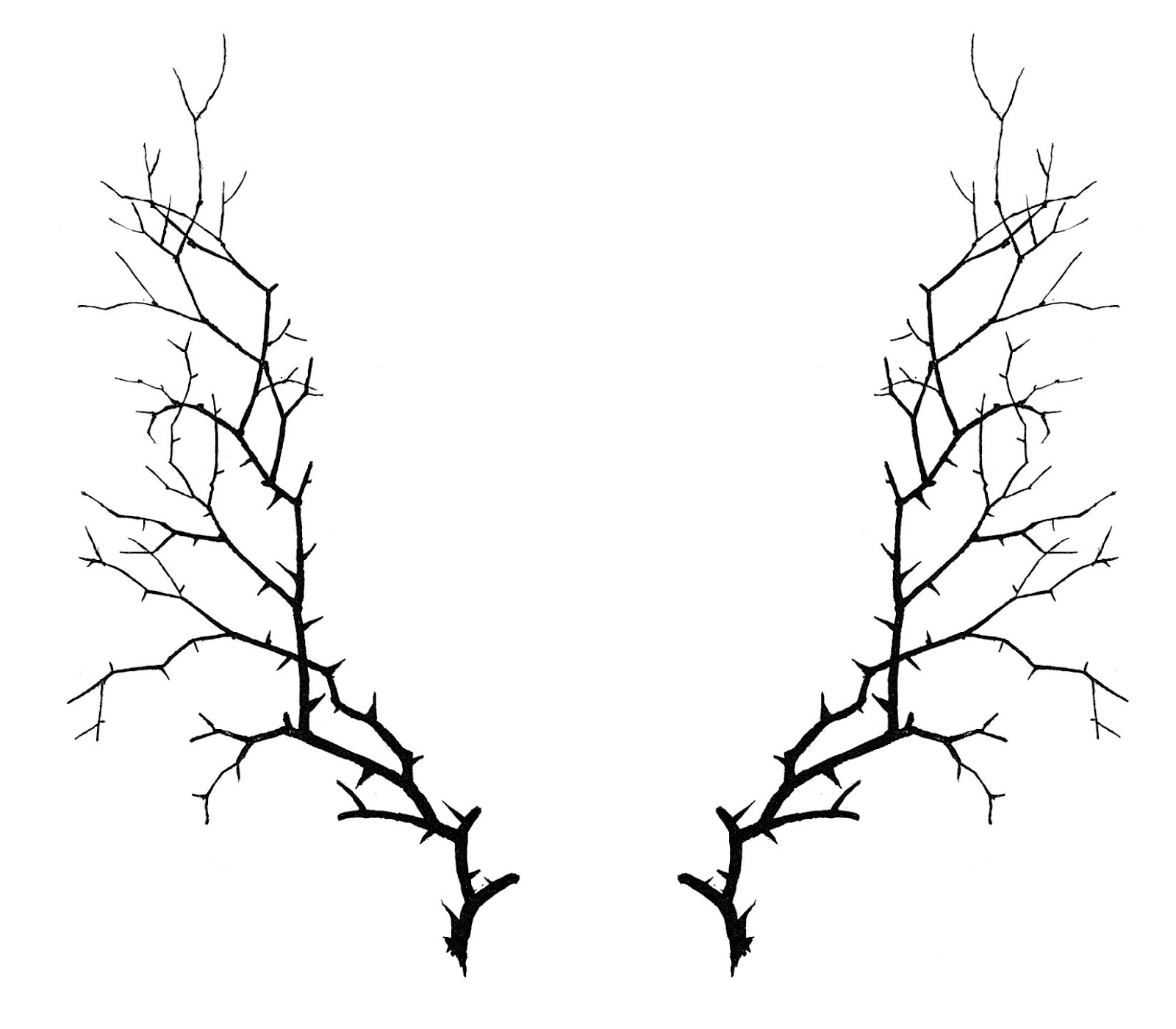 1600x1400 Drawn Branch Creepy