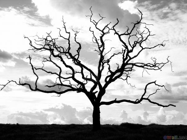 600x450 Drawn Dead Tree Spooky