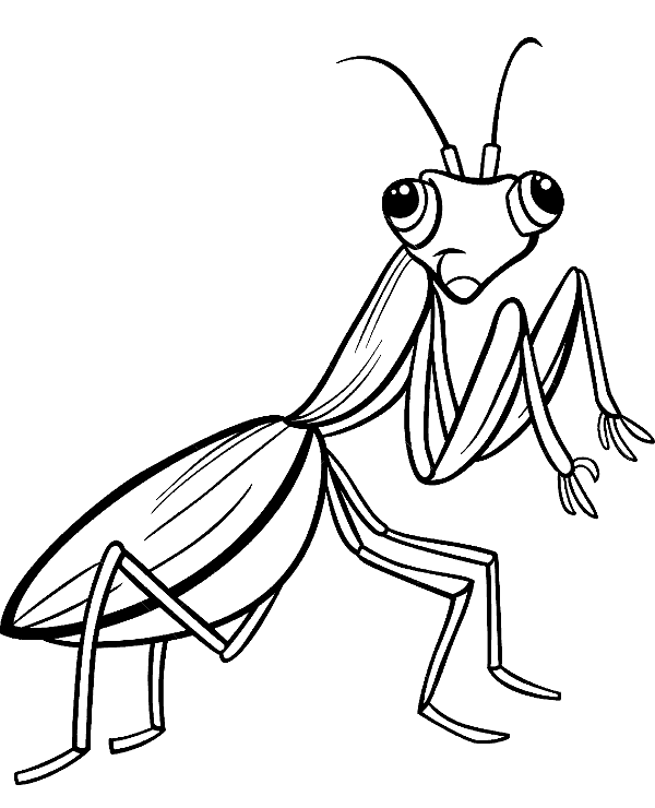 Cricket Insect Coloring Page