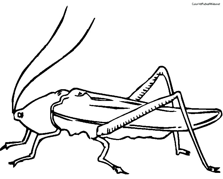 cricket insect drawing at getdrawings com