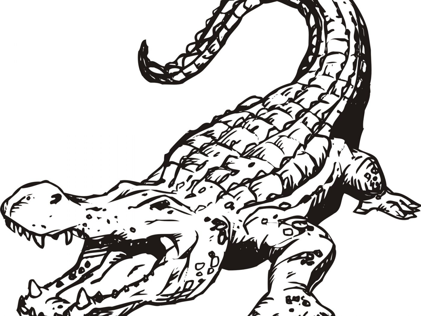 Crocodile Cartoon Drawing at GetDrawings.com | Free for personal use ...