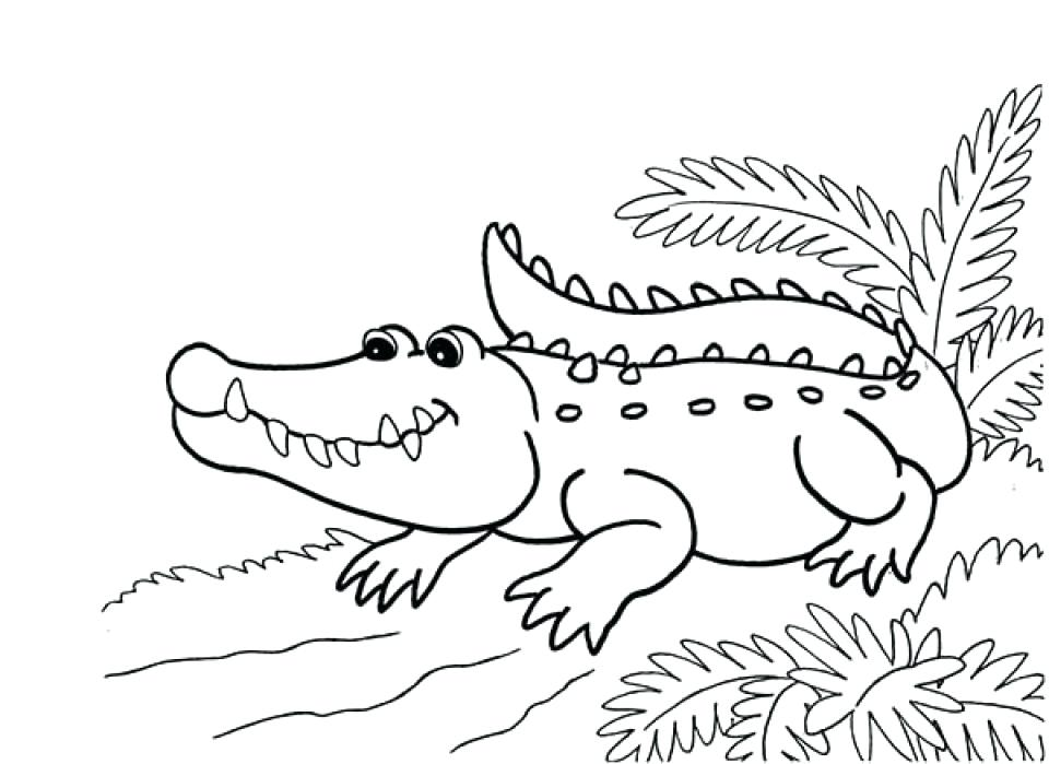 Crocodile Drawing For Kids