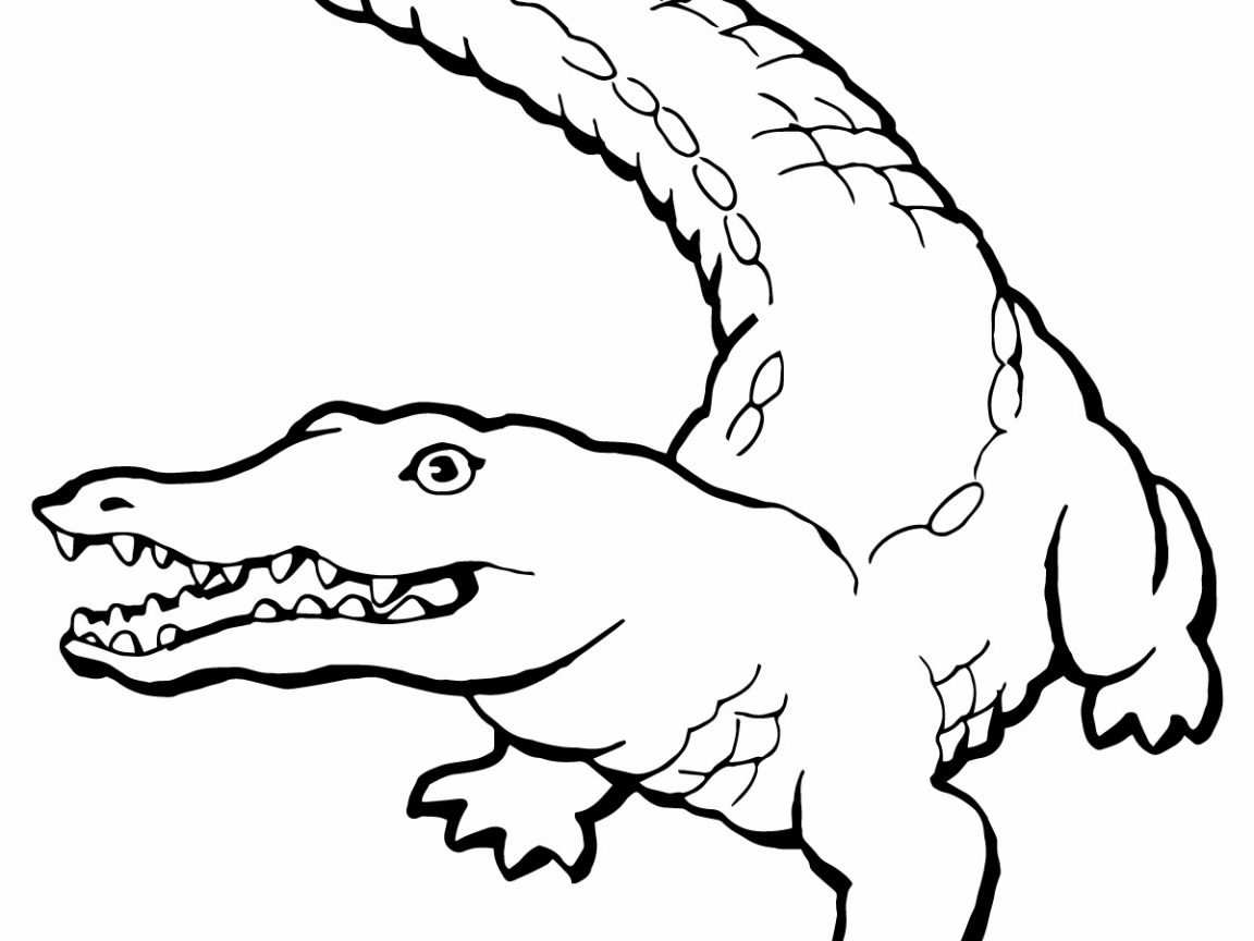 1152x864 best crocodile coloring page for your kids printable download