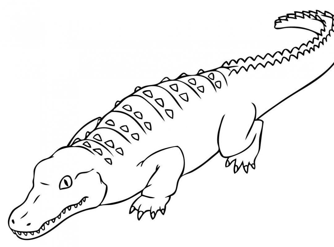 Crocodile hunter coloring pages ~ Crocodile Outline Drawing at GetDrawings.com   Free for ...