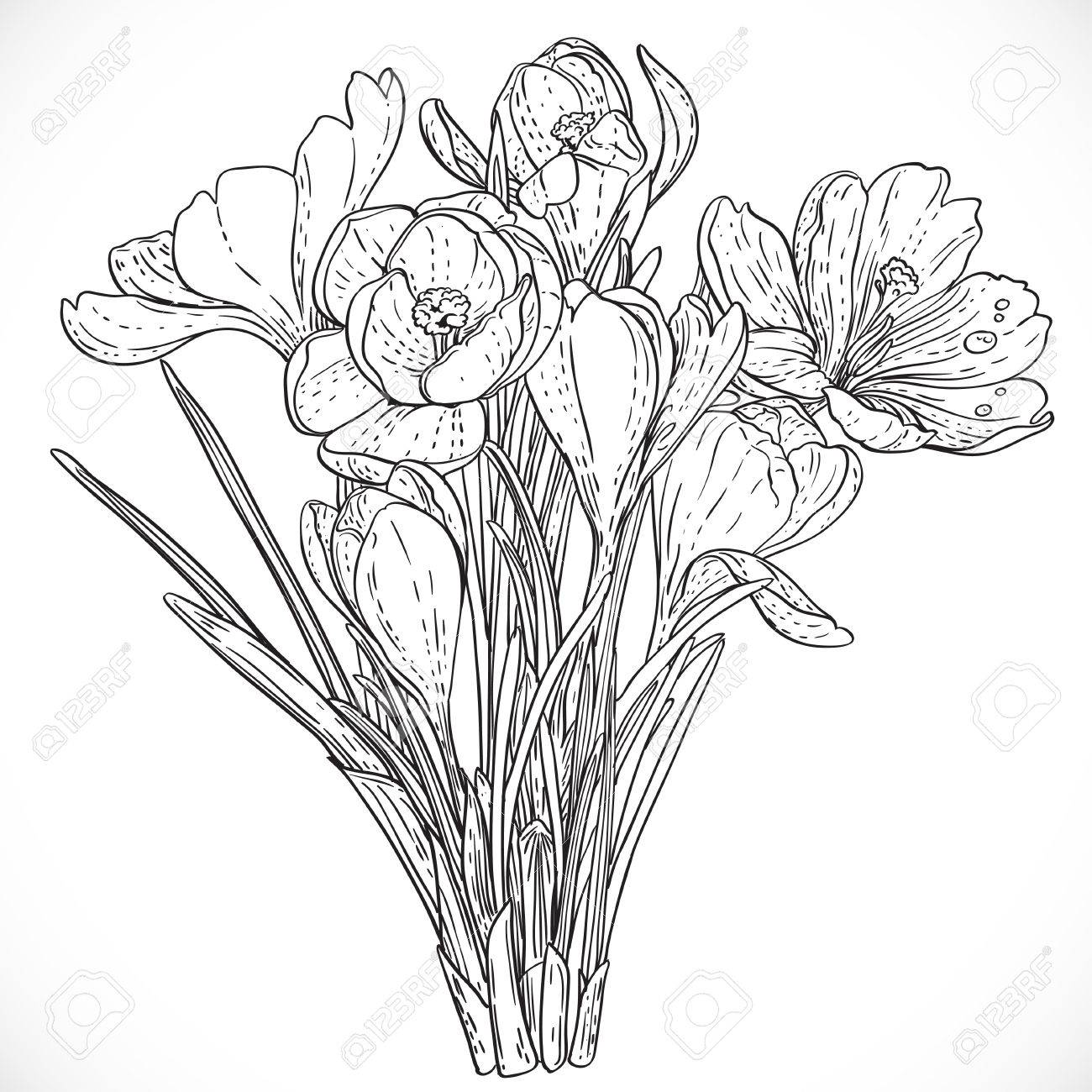 Crocus flower drawing at getdrawings free for personal use 1300x1300 3961 crocus stock illustrations cliparts and royalty free crocus mightylinksfo