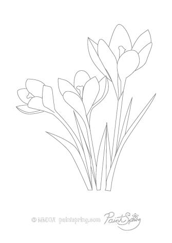 Crocus Flower Drawing at GetDrawings