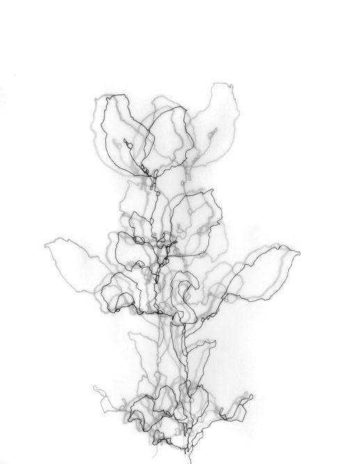Cross Contour Drawing Apple