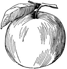 235x243 Image Result For Cross Contour Apple Drawing Contour Fruit