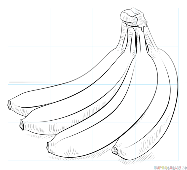 631x575 How To Draw A Bunch Of Bananas Step By Step Drawing Tutorials