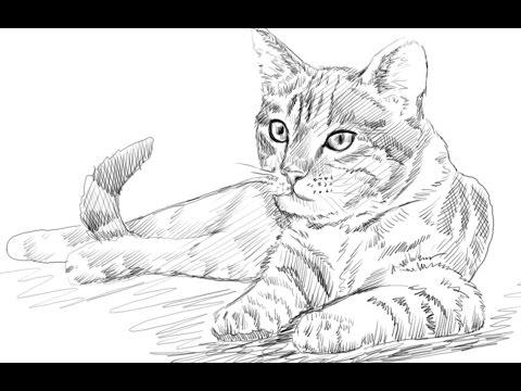 480x360 How To Draw A Cat Yzarts Yzarts