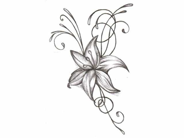 640x480 Cool Jasmine Flower Pencil Sketch Jasmine Flower Pencil Drawing