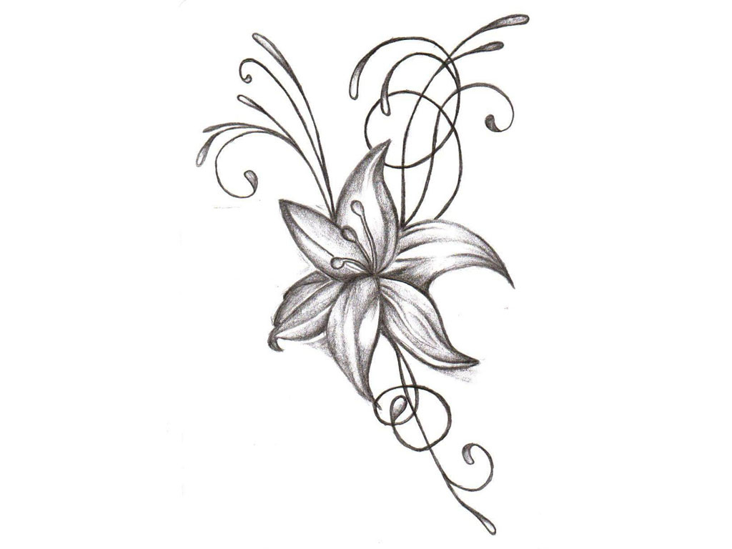 1024x768 Jasmine Flower Pencil Drawing Columbine Flowers Pictures Picture