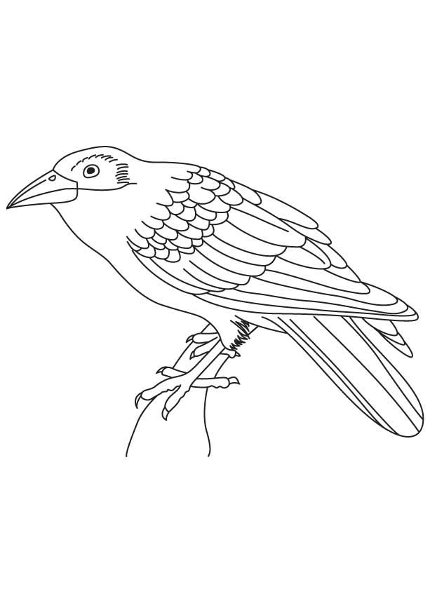 613x860 Indian Crow Coloring Page Download Free