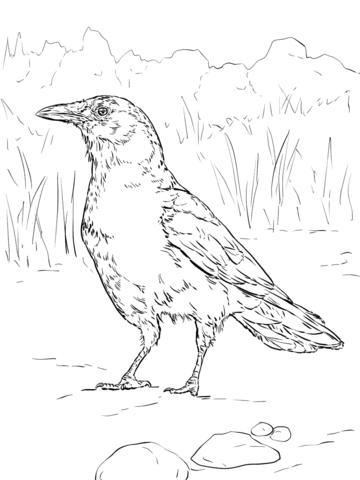 360x480 Realistic American Crow Coloring Page From Crows Category. Select
