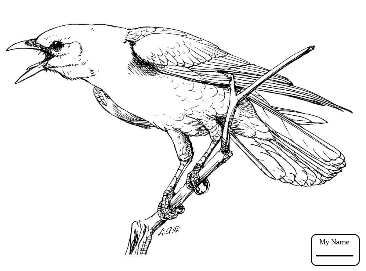 1199x888 Crows Birds Cute Crow On Branch Coloring Pages