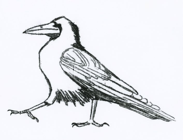 Crow Drawing Pictures