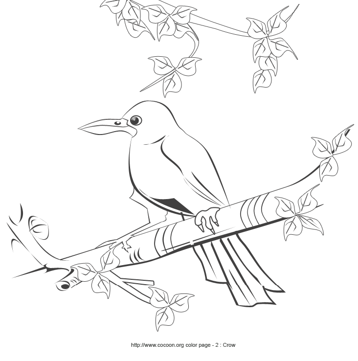 Crow Line Drawing At Getdrawings Com Free For Personal Use Crow