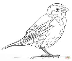236x198 Realistic American Crow Coloring Page From Crows Category. Select