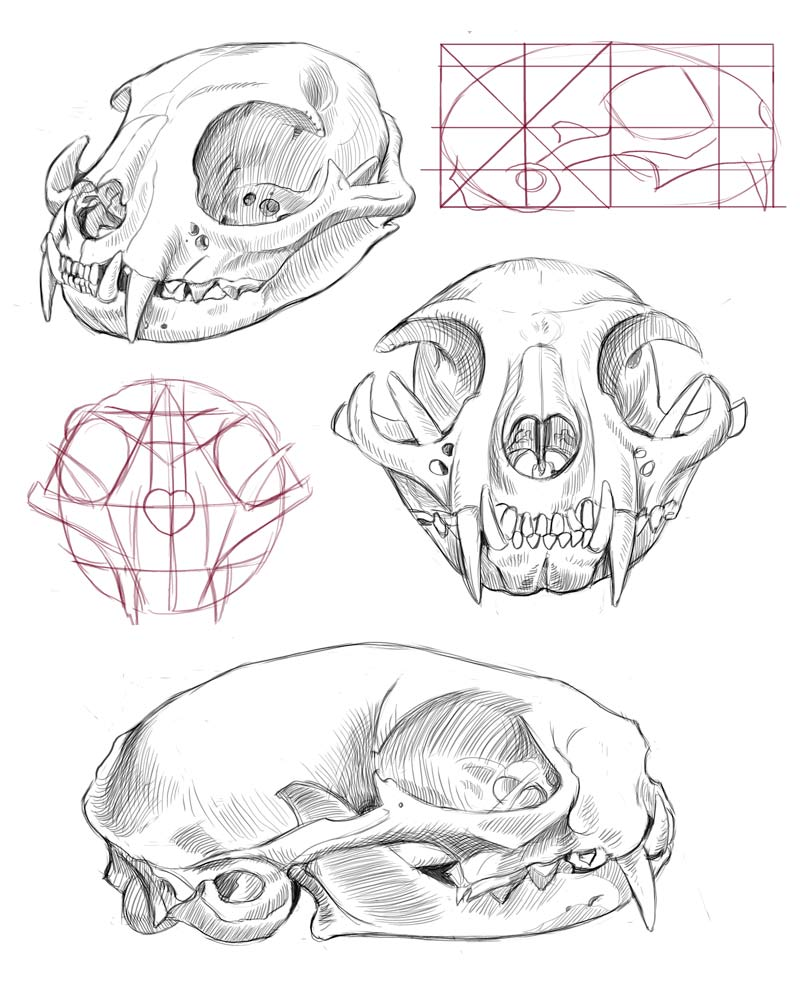 Crow Skull Drawing at GetDrawings.com | Free for personal use Crow ...