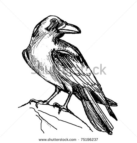 450x470 Raven Bird Drawing Raven Drawing Stock Vector Ravens,crows