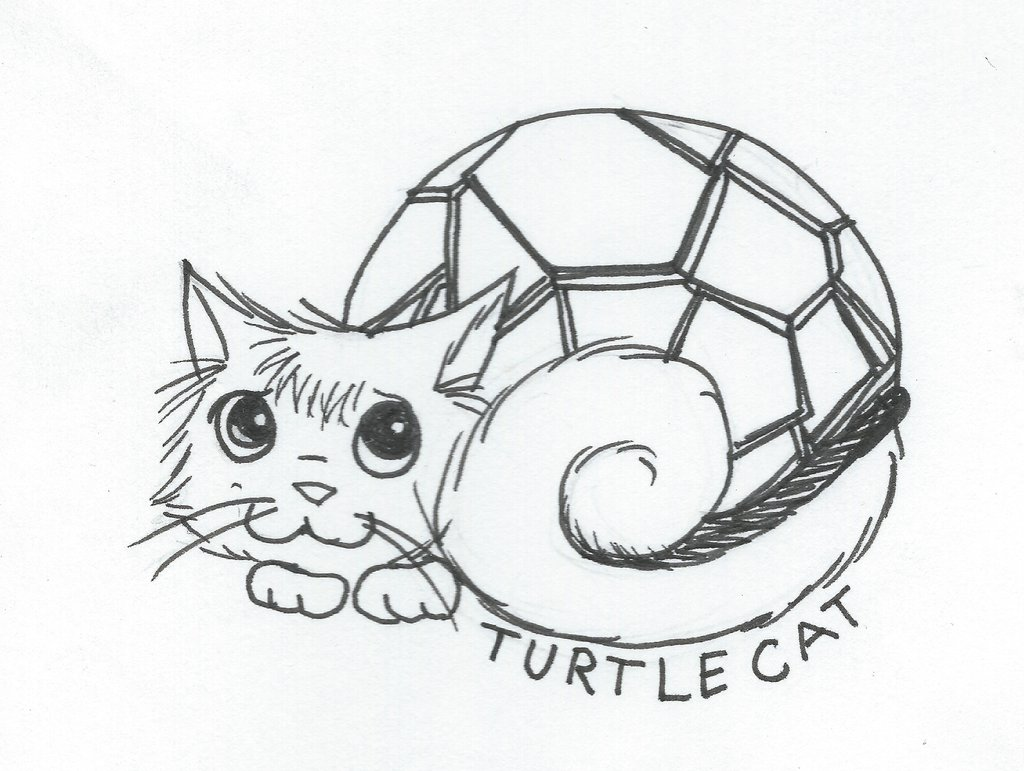 1024x771 Turtle Cat Curled Up For The Night By Bjakasaintjimmy