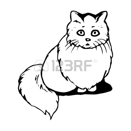 Curled Up Cat Drawing at GetDrawings com | Free for personal use