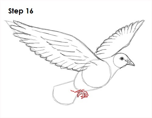 500x386 How To Draw A Dove