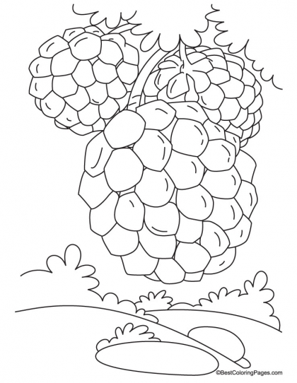 420x542 Custard Apple On Tree Coloring Pages Download Free Custard Apple