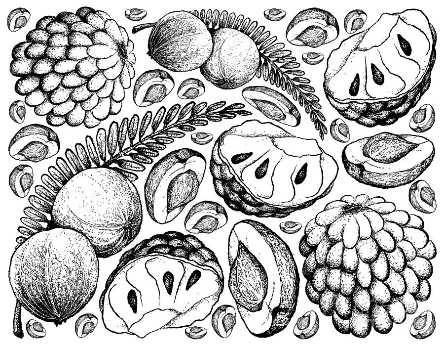 900x700 Hand Drawn Of Indian Gooseberry And Custard Apple Background