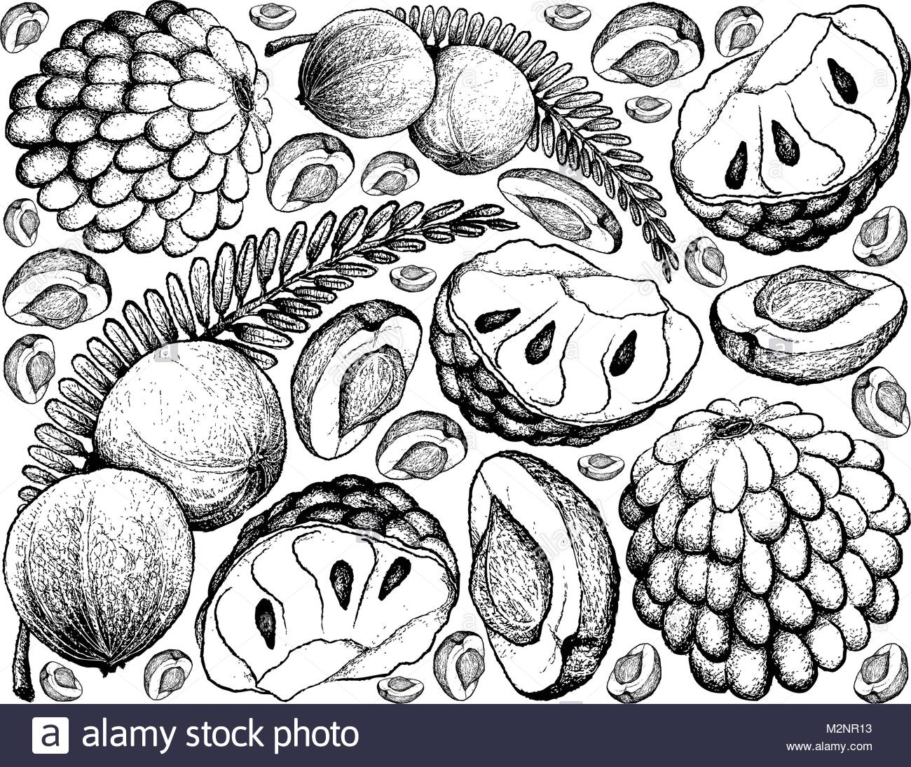 1300x1095 Tropical Fruits, Illustration Of Hand Drawn Sketch Fresh Indian