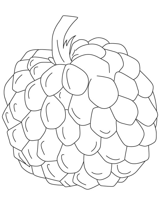 630x810 Custard Apple Clipart Black And White 10 Clipart Station