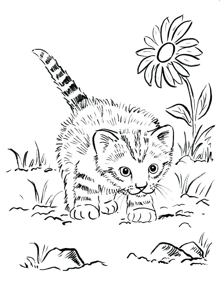 760x985 Custom Coloring Pages Personalized Coloring Pages Free Kitten