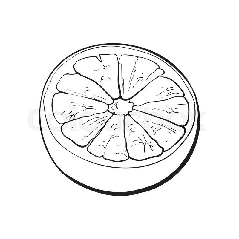 800x800 Half Of Ripe Grapefruit, Orange, Hand Drawn Black And White Sketch