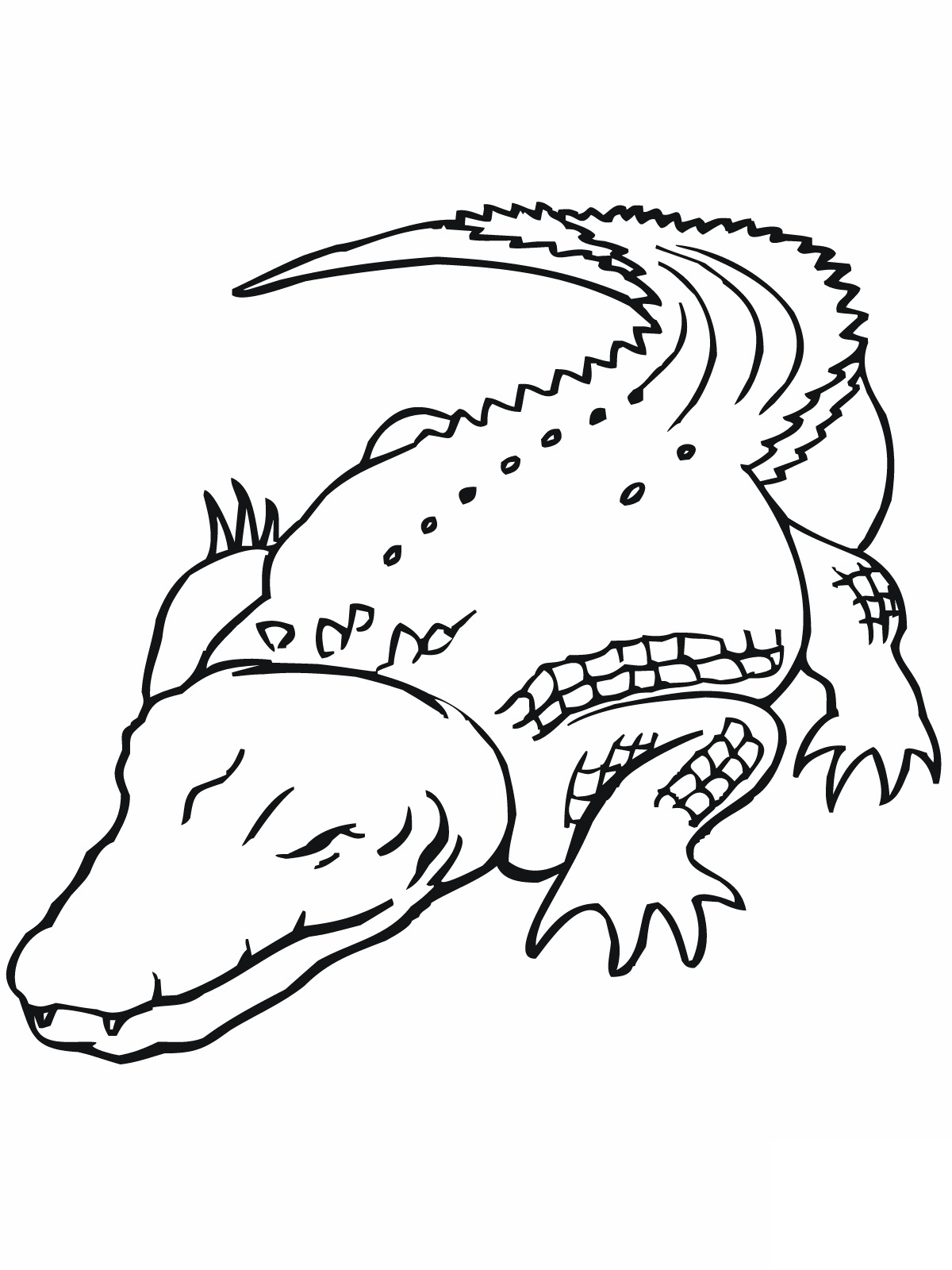 1200x1600 Crocodile Coloring Pages